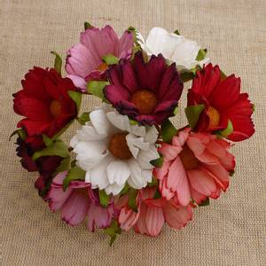 Bilde av Flowers - Chrysanthemums - SAA-325 - Mixed Red/Pink & White - 50