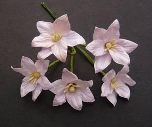 Bilde av Flowers - Lily Flowers - SAA-140 - Baby Pink - 50stk